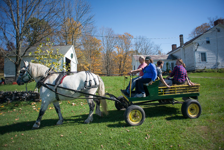Patty & the Alans on a Horse Cart Ride