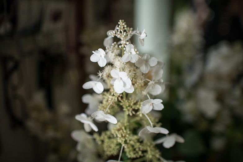 Flowers from Greer