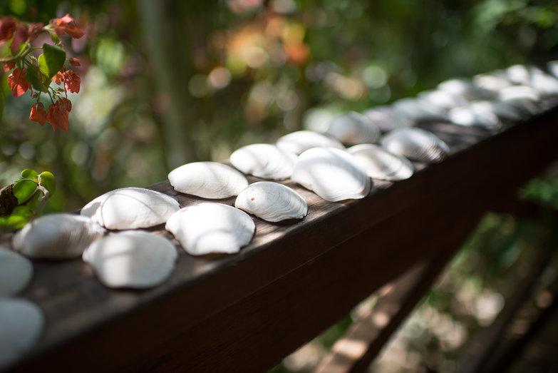 Seashells on Deck Railing