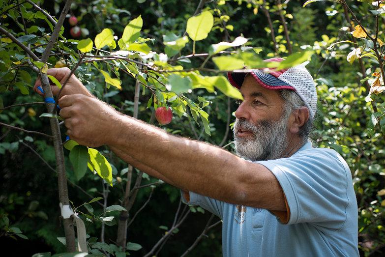 David at Elmore Roots Nursery Tagging Tree