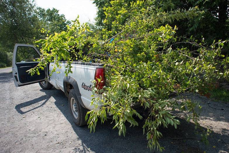 Fourteen Fruit Trees in Truckbed