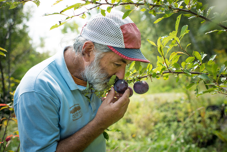 David Smelling Plum at Elmore Roots Nursery