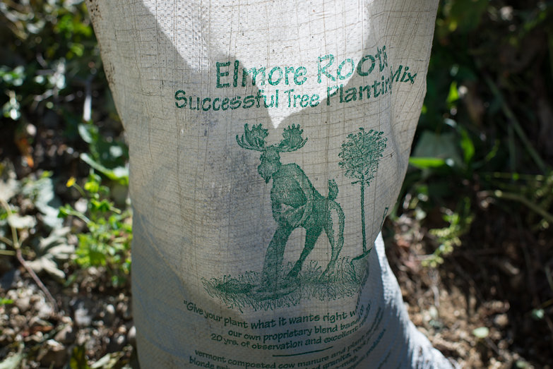 Elmore Root's Successsful Tree Planting Mix