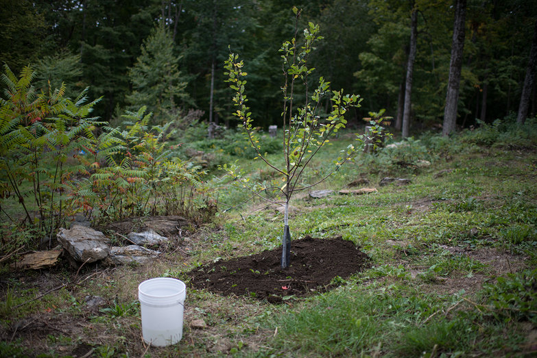 Fruit Tree Planted
