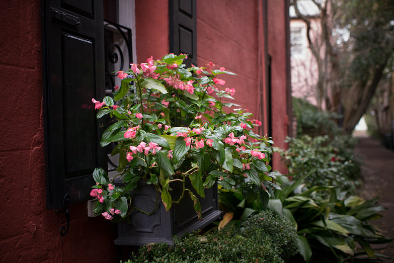 Charleston Flower Box