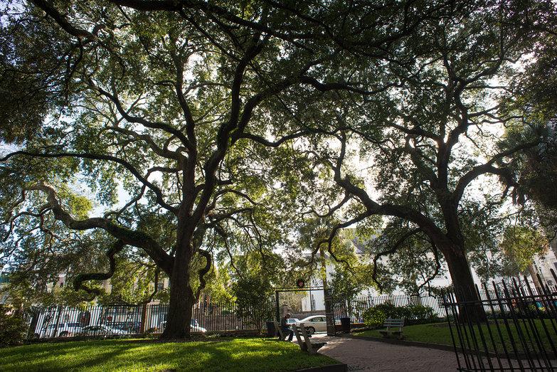 Amazing Trees in Charleston Park