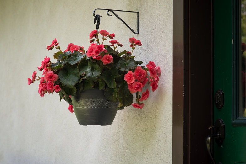 Hanging Basket of Begonias on Exterior of Strawbale Cottage