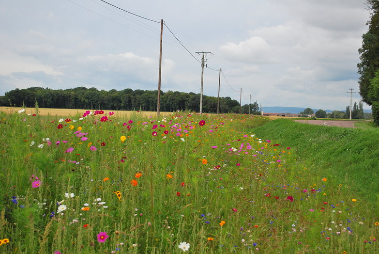 Flowery Roadside