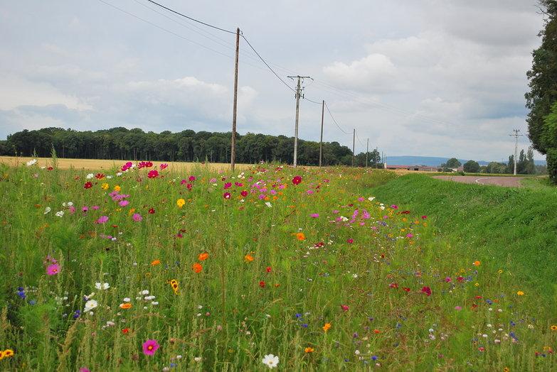 Flowery Roadside