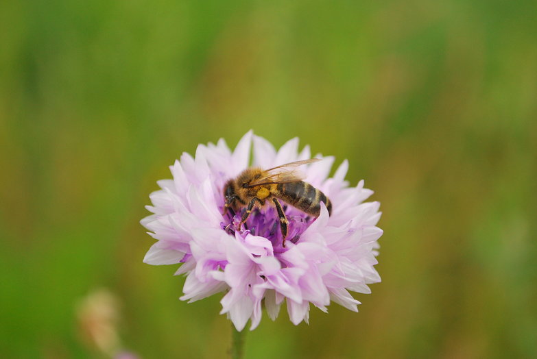 Busy Bee