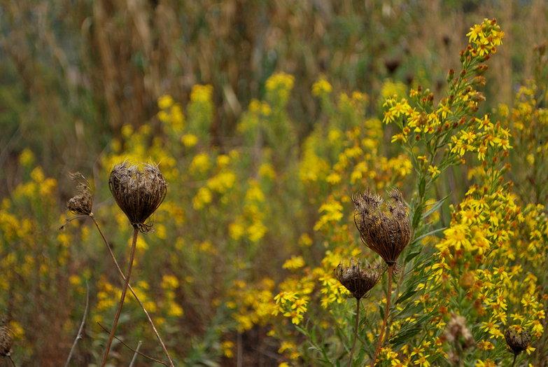 Fall Weeds