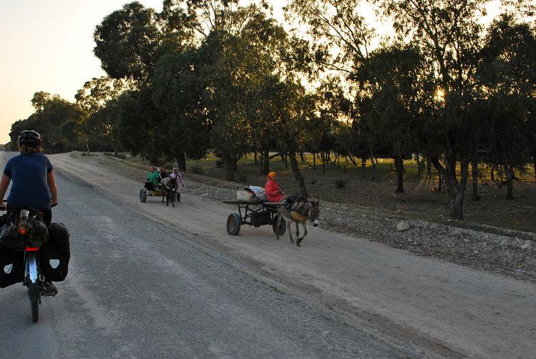 Tara & Donkey Carts