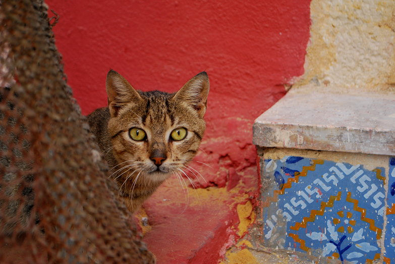 Sousse Stray Staring