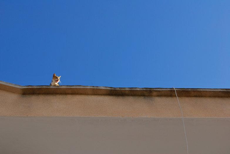 Yowling Kitty