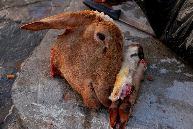 Eid al-Adh Sheeps Head