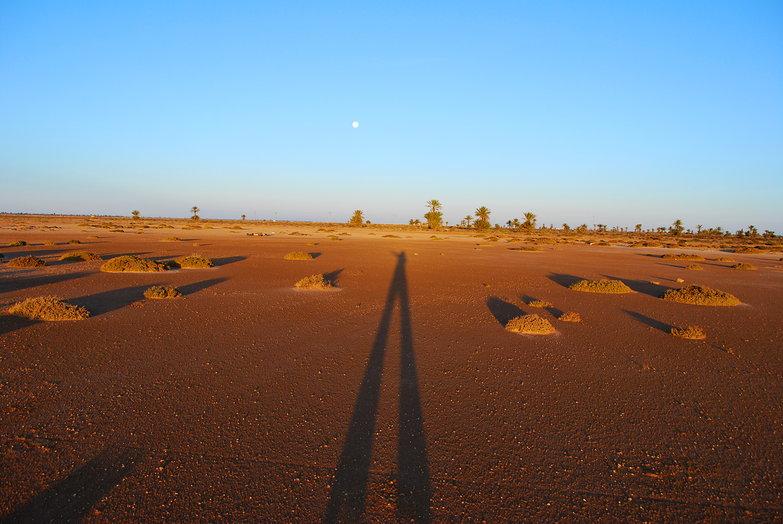Looong Shadow
