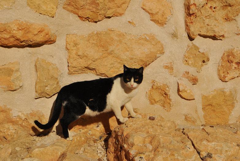 Chenini Cat