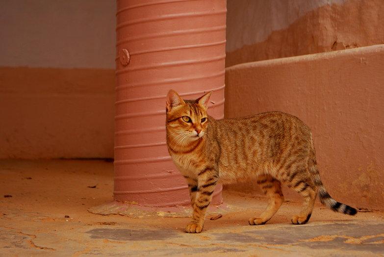 Matmata Cat
