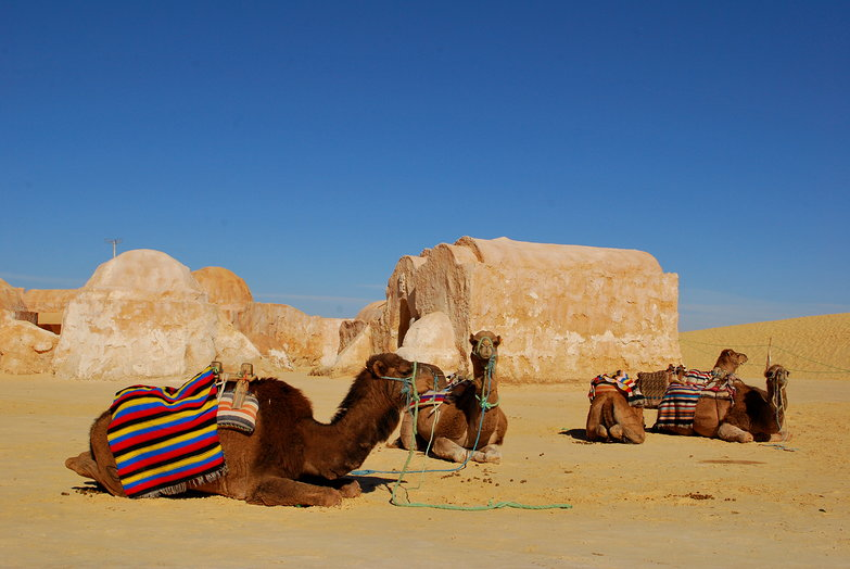 Camels &amp; Star Wars Set