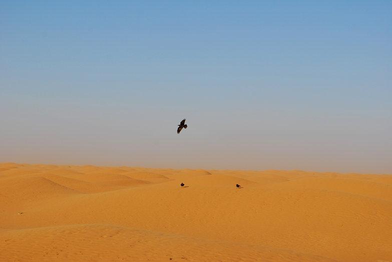 Saharan Birds