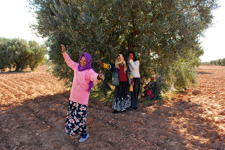 Olive Picker Dancing