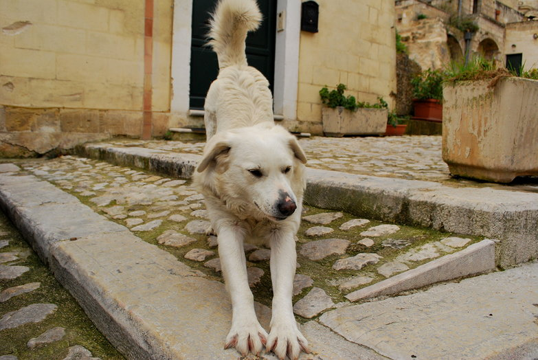 Matera Puppy Stretching
