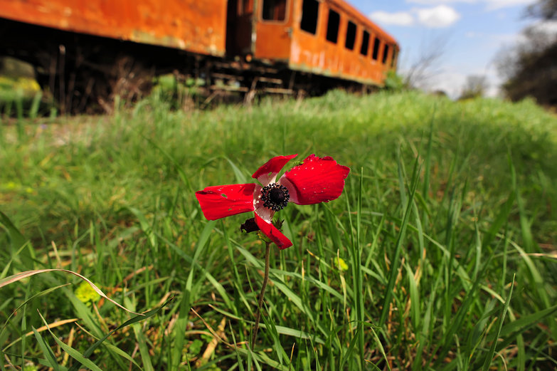 Poppy &amp; Train
