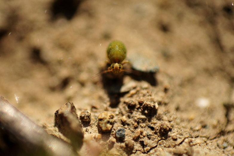 Tiny Green Bug