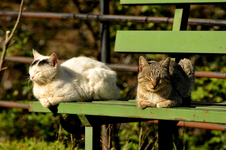 Meteora Cats
