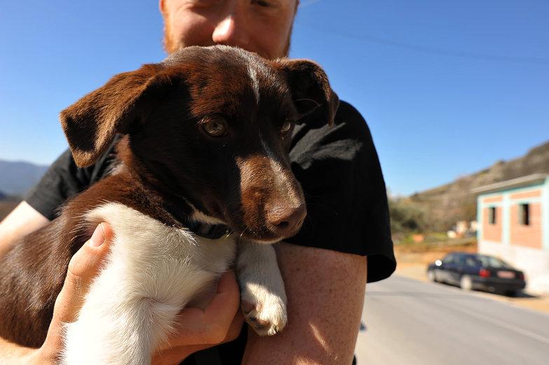 Tyler + Puppy