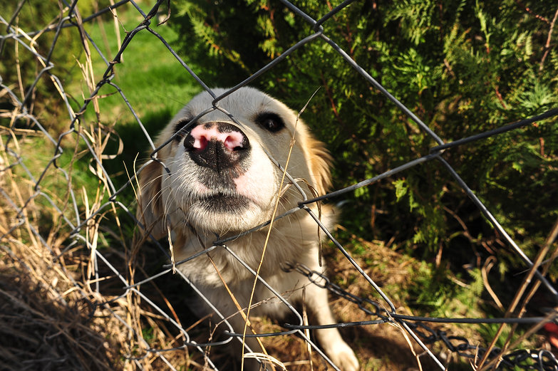 Doggie Nose through Fence