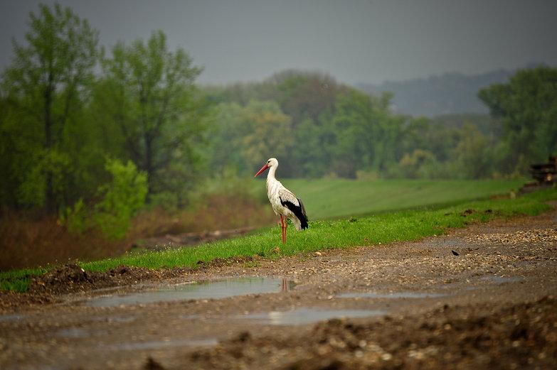 Serbian Crane