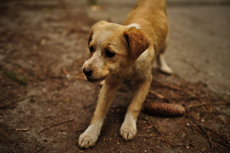Tismana Monastery Puppy