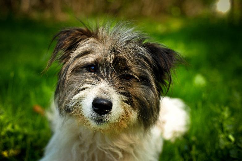Friendly Stray Romanian Dog