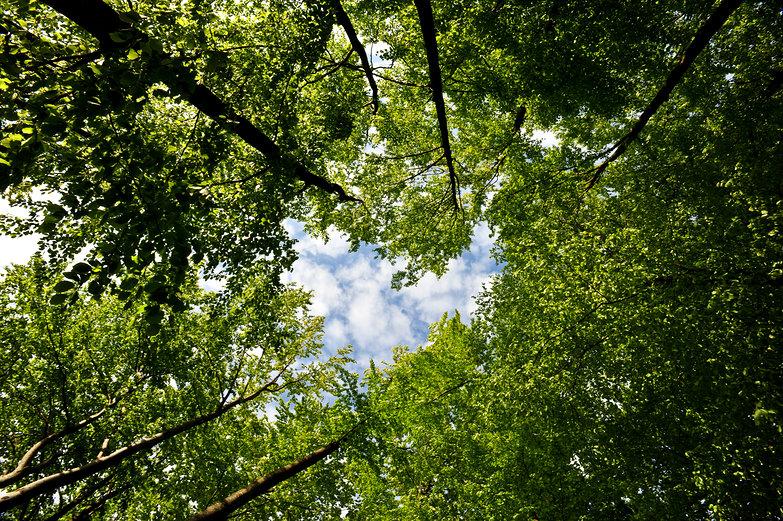 Trees & Sky (Heart)