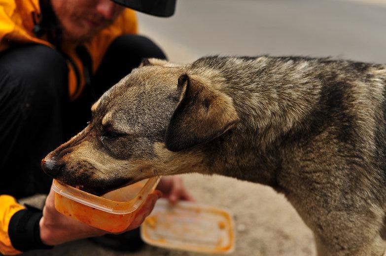 Feeding Romanian Stray
