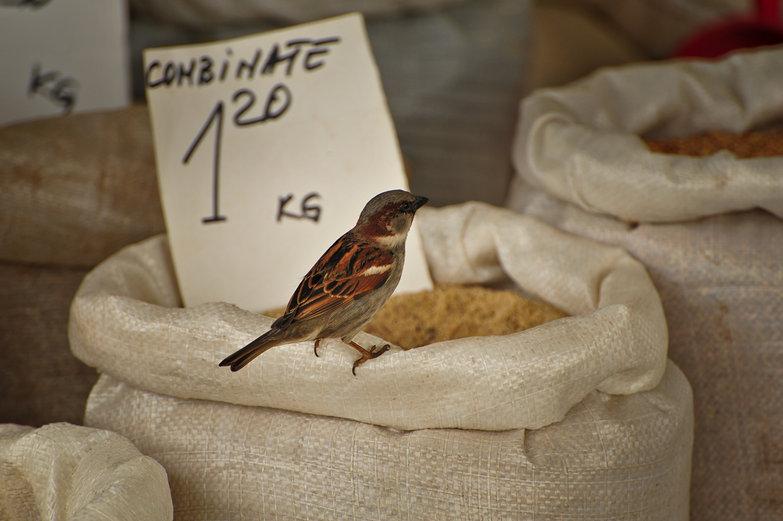 Lucky Market Bird