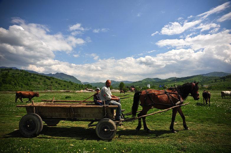 Horse & Wagon