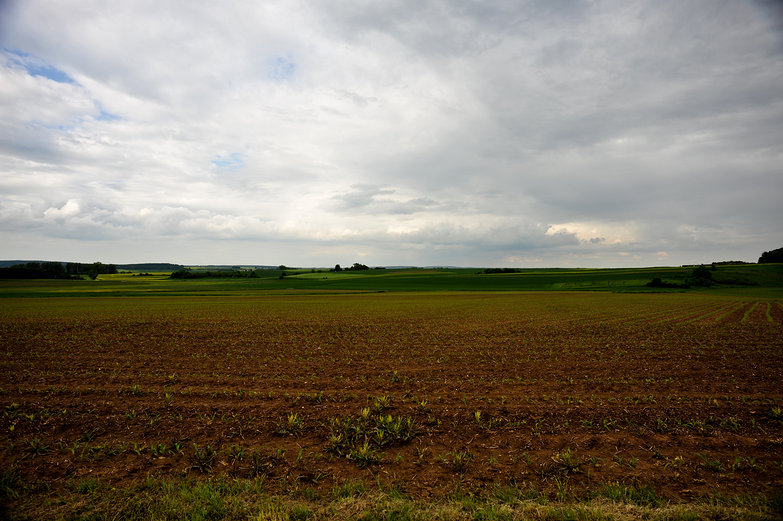Cloudy Field