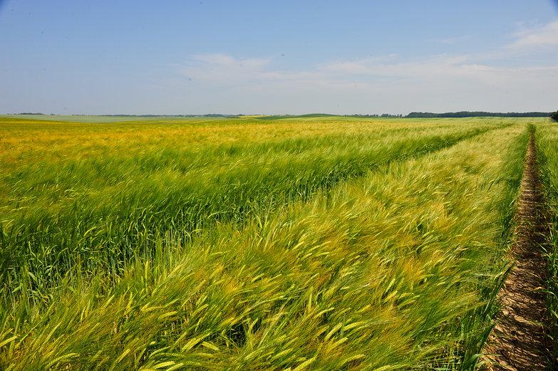 Polish Field