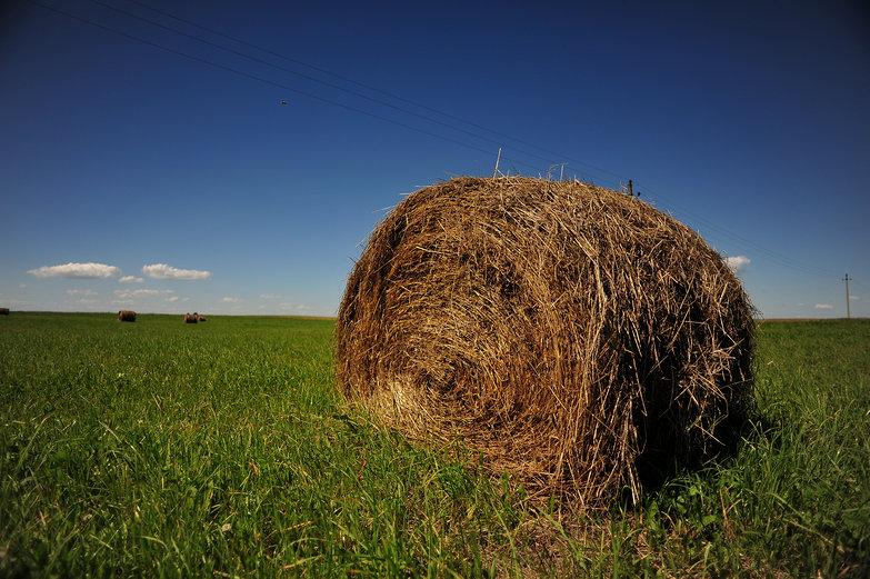 Lithuanian Hay Bale