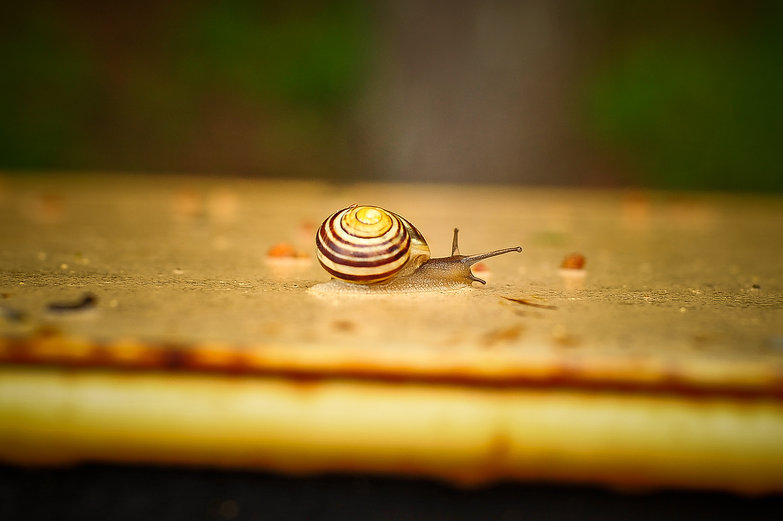 Snail on a Dumpster