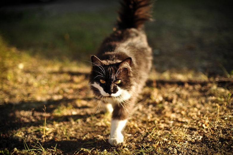 Lappeenranta Cat