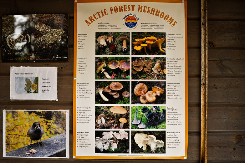 Arctic Forest Mushrooms