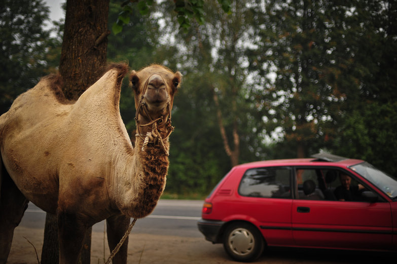 Camel & LRC
