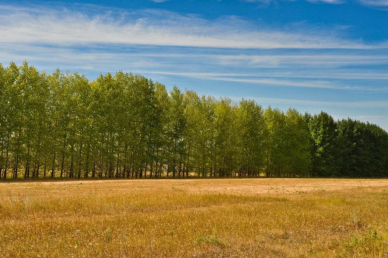 Treeline Gradient
