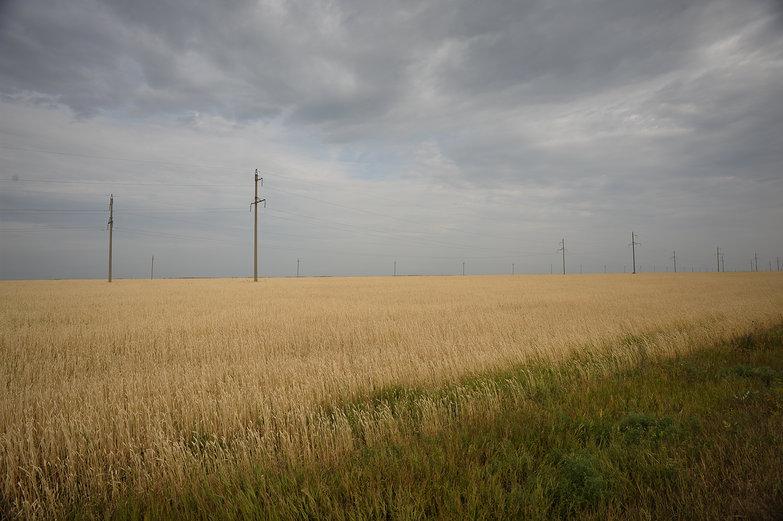 Siberian Field