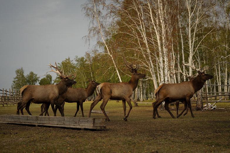 Elk Preserve?