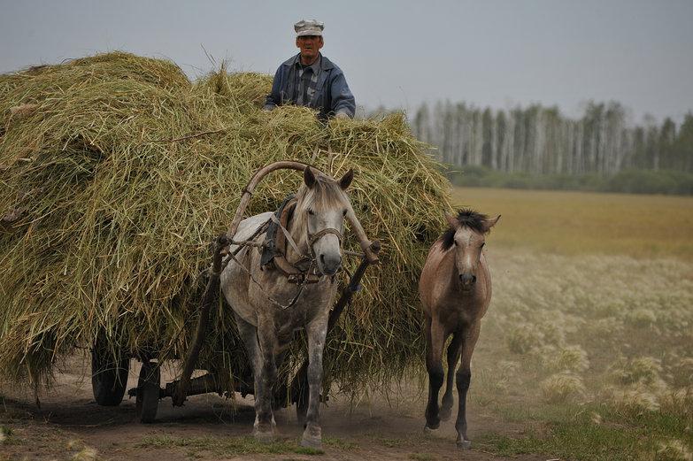 Siberian Man & His Horse-Drawn Wagon