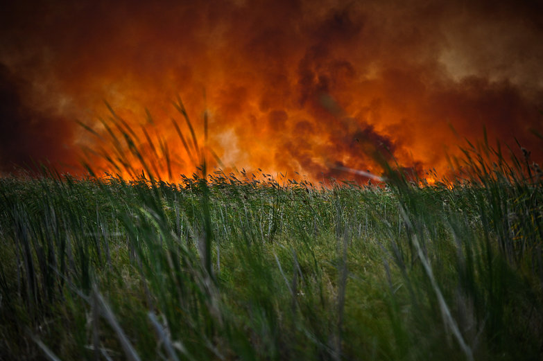 Fire Through the Grass
